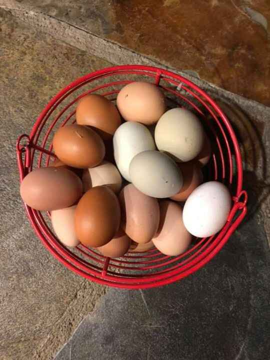 We are filled to the brim with eggs! I am down to one drop per week at Ebon Coffee due to limited time but Lenny generou...