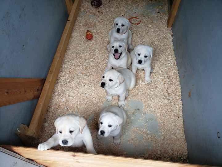 Bella and I want to thank all our newest  puppy buyers for adding one of Bella's pups to their homes.   We hope they enj...