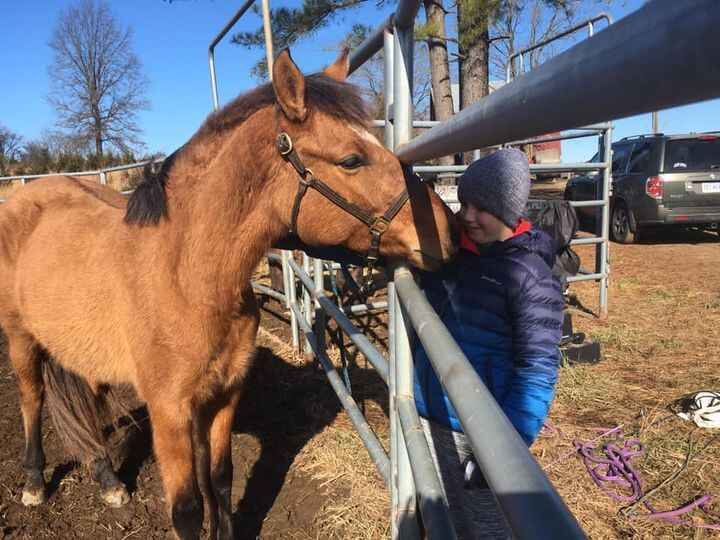 While it's not early spring in the technical sense, spring things are happening at the farm!  Two of our excellent ponie...