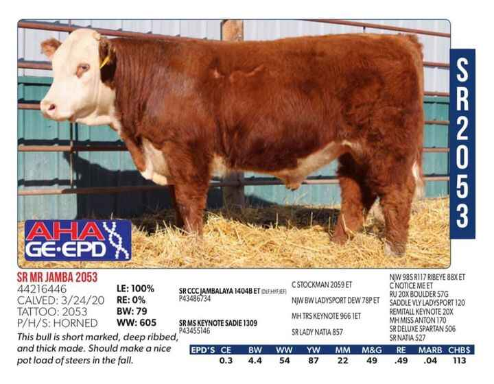 Horned hereford fans take notes!  Here is a horned (dehorned at branding) Jambalaya son offered by Sidwell Ranches TOMOR...
