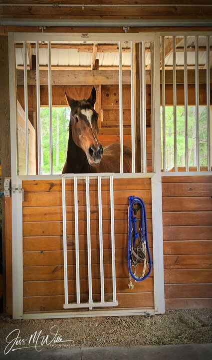 DeeDee is a 36yr old mare who no longer has eyes. Along with specialized care from Lisa and her staff, she has two helpe...