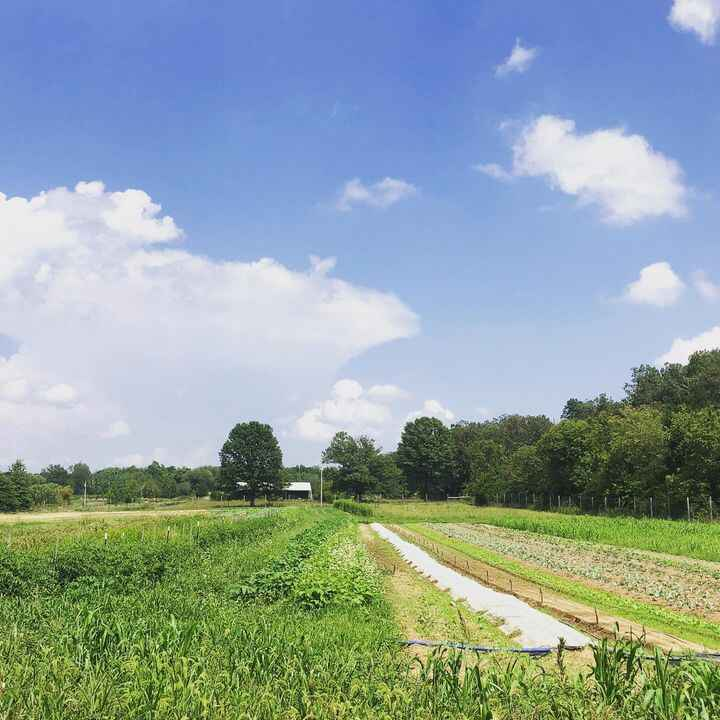 Summer planting on the left, fall planting on the right. Although we're on a break in between the CSA seasons (summer & ...