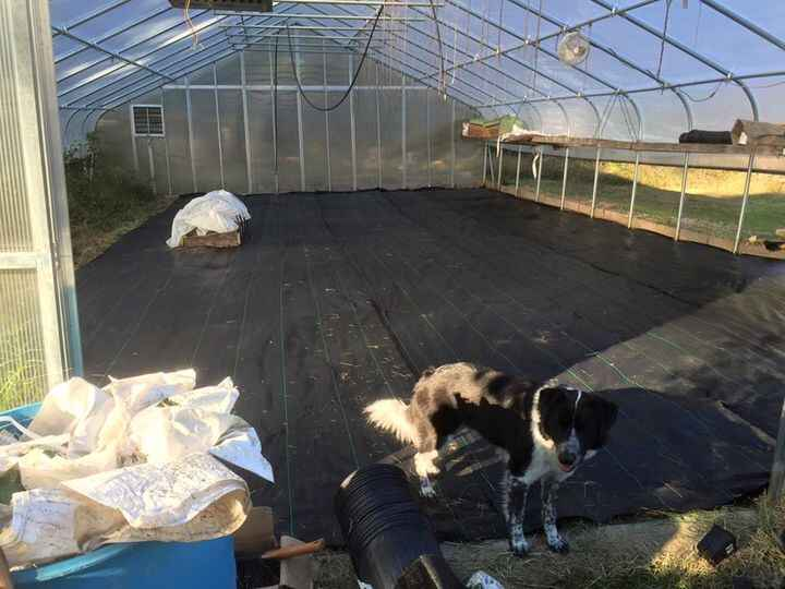 For those who know, you'll know. We finally, hopefully, won the battle of the weeds in our greenhouse.